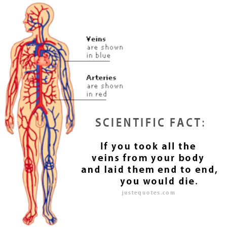 Scientific Fact: If you took all the veins from your body and laid them end to end, you would die.