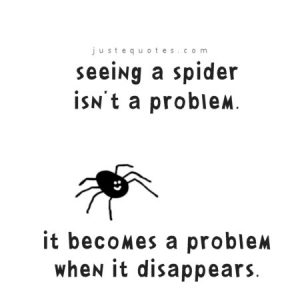 Seeing a spider isn't a problem