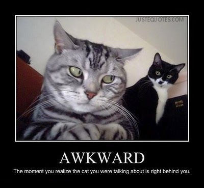 Awkward the moment you realize the cat you were talking about is right behind you